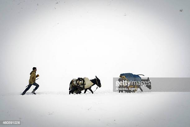 A shepherd boy runs behind donkeys loaded with belongings amidst the heavy snow during the seasonal migration from the plateau back to his village in...