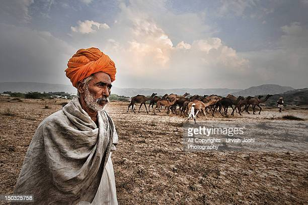shepherd drawing his cattle home - headwear stock pictures, royalty-free photos & images