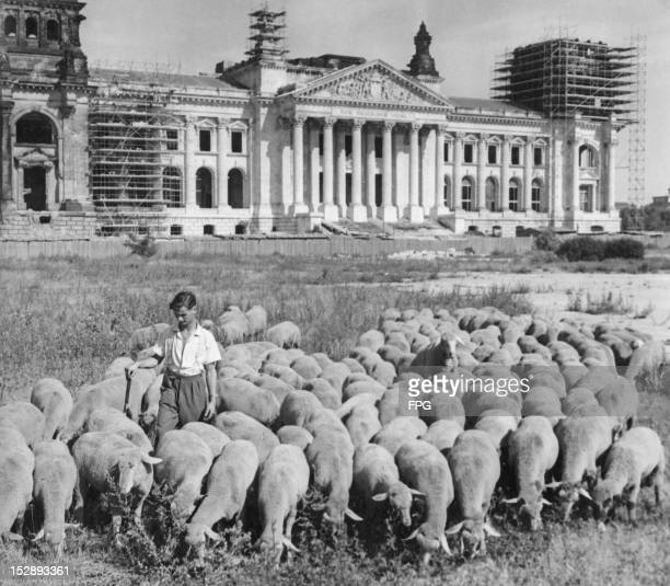 A shepherd guards his flock in front of the Reichstag in Berlin 16th July 1959 Badly damaged by a fire and air raids during World War II the...