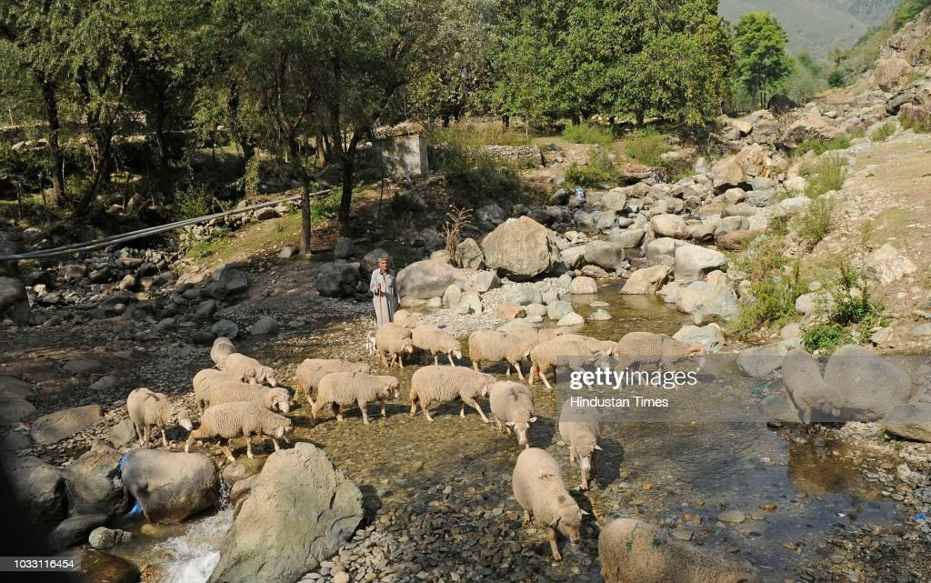 A shepherd guides his sheep to cross a stream on the outskirts of Srinagar, on September 14, 2018 in Srinagar, India.
