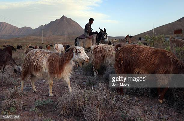 A shepherd herds goats at sunset on May 30 2014 near the village of Nasrabad in central Iran This week marks the 25th anniversary of the death and...