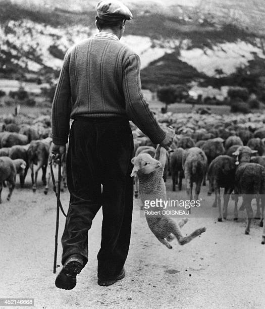 Shepherd holding a lamb in the hand during the transhumance Alpes maritimes 1958 in France