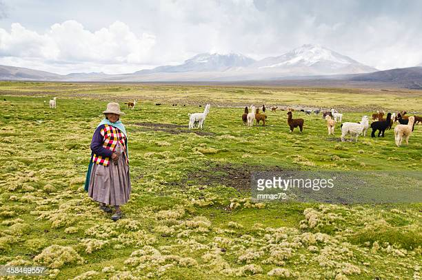 shepherd in the sajama national park - bolivia stockfoto's en -beelden