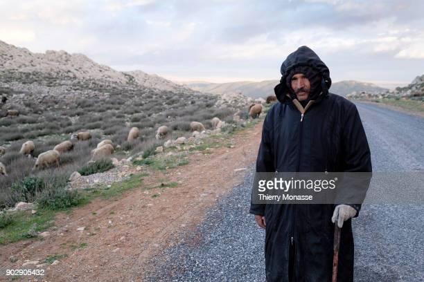 Shepherd is seen around the Jugurtha Tableland on December 23 Tunisia