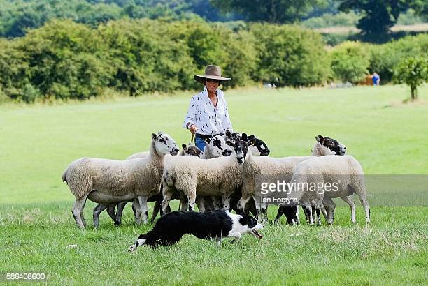 Shepherd Katy Cropper and her dogs Zsaro and Flash take part in the Brace run as they take part in the British National Sheep Dog Trials on August 6,...