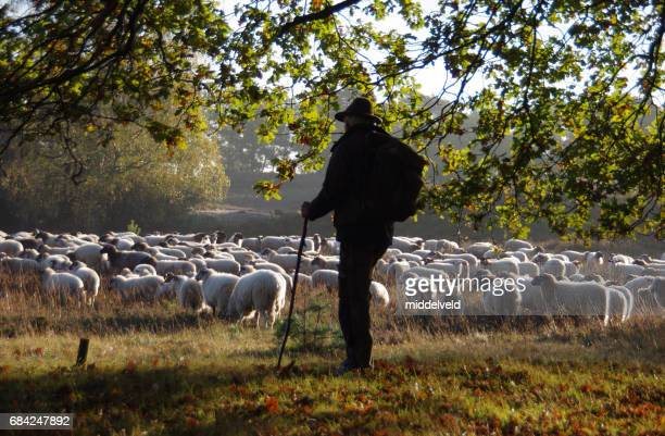 shepherd leading his herd - shepherd stock pictures, royalty-free photos & images