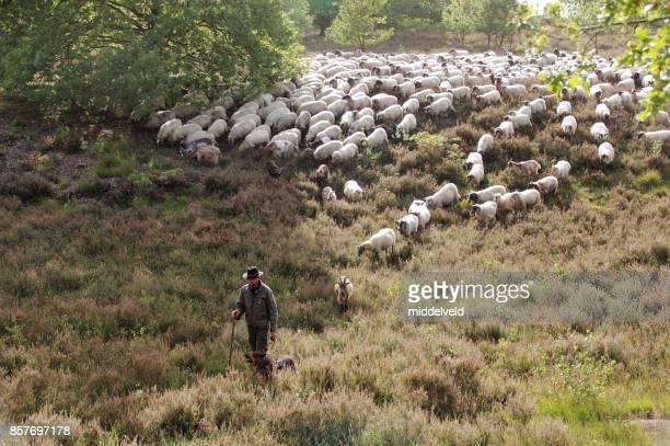 shepherd leading seu rebanho - pastor de ovelha - fotografias e filmes do acervo