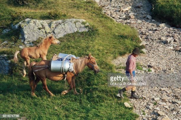 Shepherd leading horses carrying milk to the Calvi refuge Val Brembana Lombardy Italy