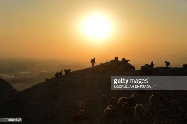 Shepherd leads his herd of sheep and goats on a hilltop during sunset on the outskirts of Jalalabad on December 2, 2020.