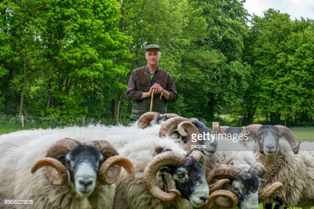 Shepherd leaning on his staff , flock of sheep in the foreground