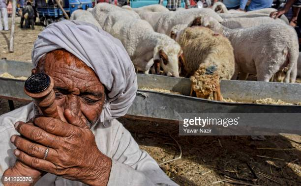 A shepherd smokes a traditional chillam filled with tobacco as he waits for Muslim customers to sell his sheep for the upcoming Muslim festival on...