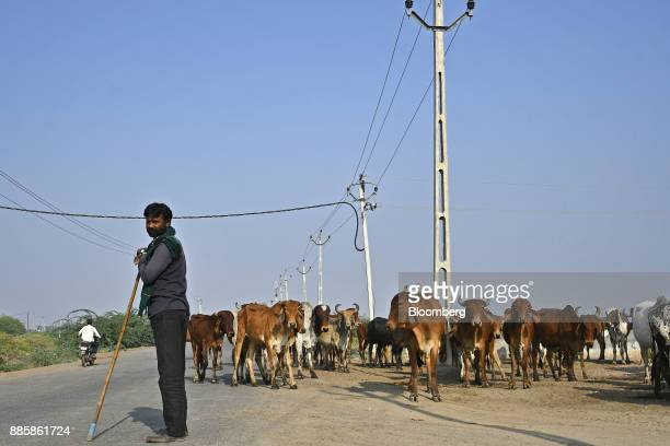 A shepherd stands next to his herd of cattle on a road running through a project site for a 920squarekilometer industrial area located on the...