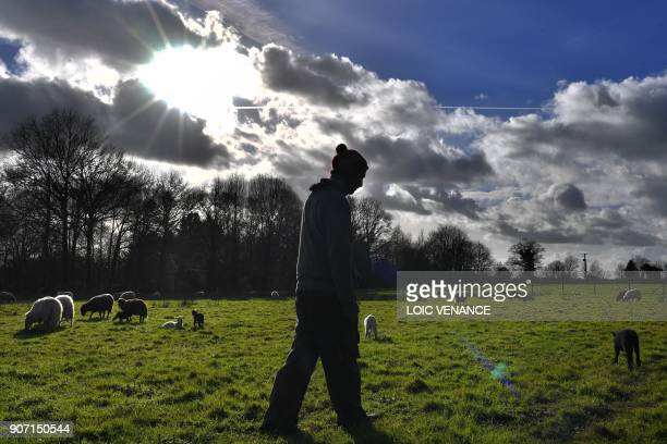 A shepherd takes care of his sheeps in the 'Zad' of NotreDamedesLandes on January 19 2018 two days after the French government's official decision to...