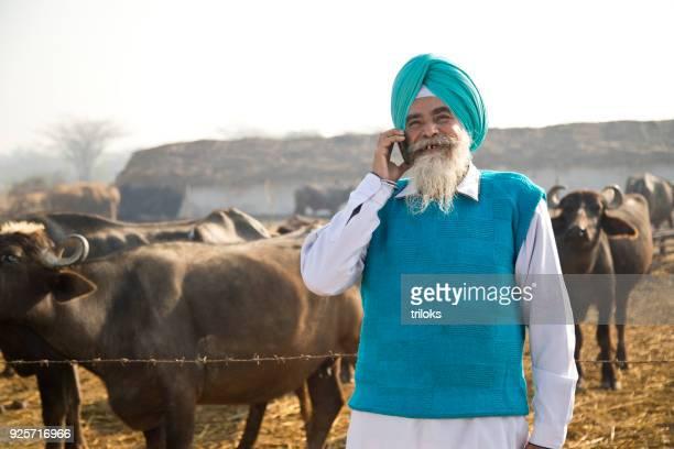 shepherd talking on mobile phone - asian ox imagens e fotografias de stock