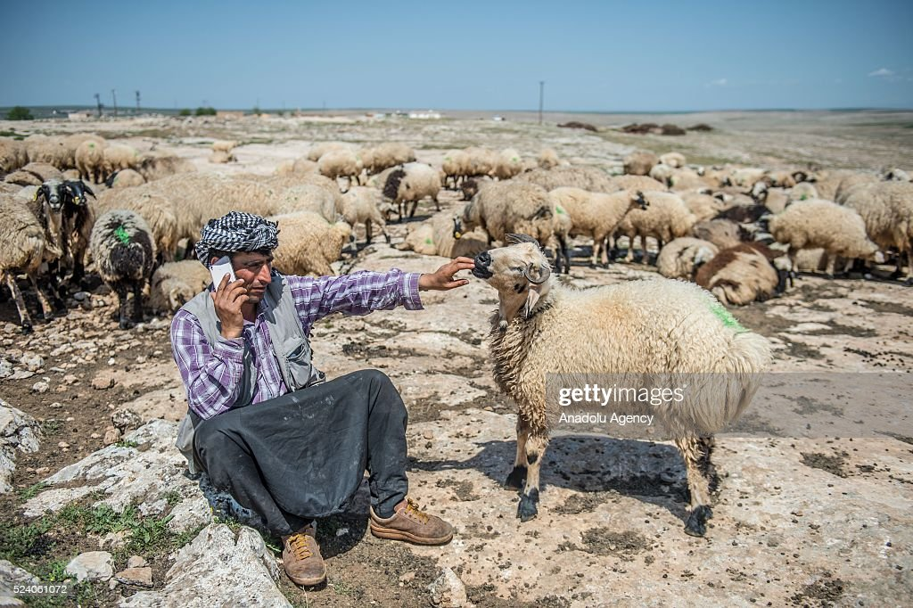 Shepherds charge their phones with solar panels carried by donkeys in Turkey : News Photo