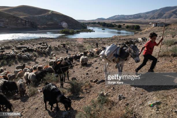 A shepherd tends to his flock grazing in a field near the Kilic village by the Tigris which will be significantly submerged by the Ilisu dam on...