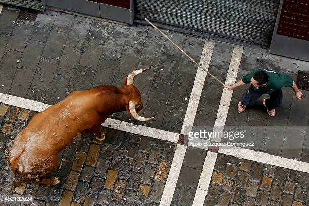 A shepherd tries to guide the last Miura's fighting bull which horned at least two revellers at Calle Estafeta during the ninth day of the San Fermin...