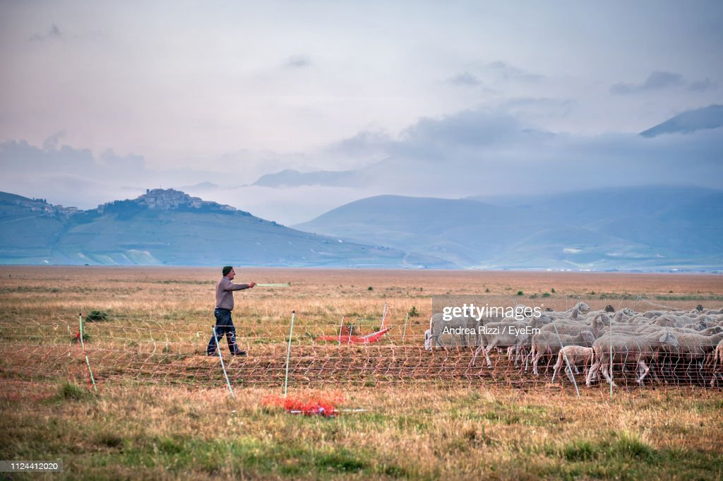 Shepherd Walking With Sheep On Field Against Mountains : Foto stock