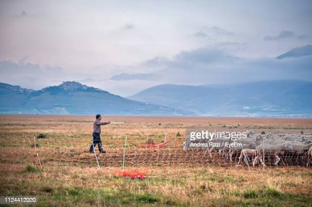 shepherd walking with sheep on field against mountains - andrea rizzi stockfoto's en -beelden