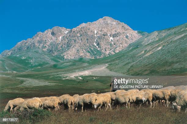 Shepherd with a flock of sheep Campo Imperatore Gran Sasso National Park Abruzzi Italy