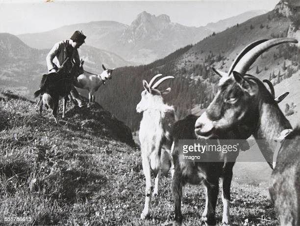 Shepherd with goats on a Tyrolean alpine transhumance About 1935 Photograph by Erika Schmachtenberger / Munich