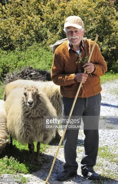 Shepherd with sheep in Promyri Pelion Greece