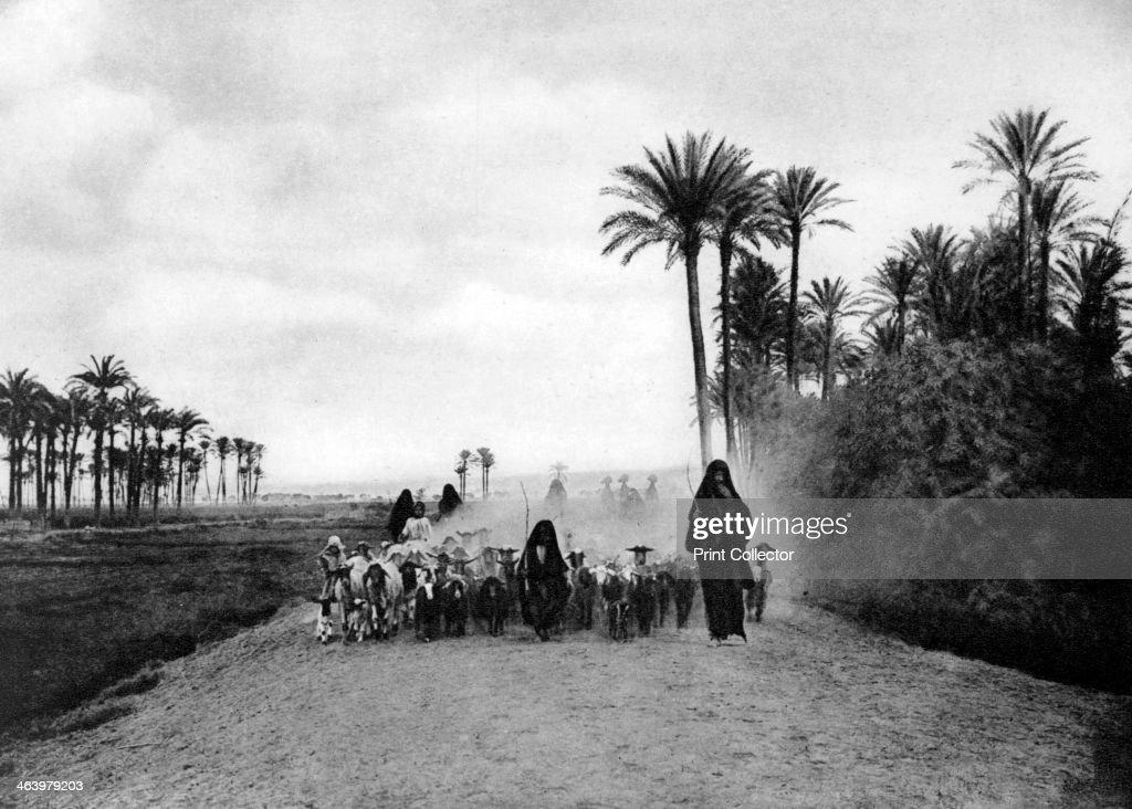 Shepherding sheep near Cairo, Egypt, c1920s. : News Photo