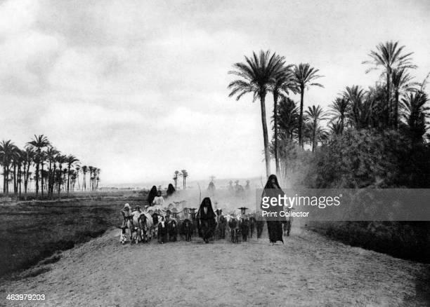 Shepherding sheep near Cairo Egypt c1920s Plate taken From In the Land of the Pharaohs published by Lehnert Landrock