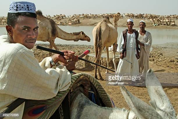 Shepherds Arab