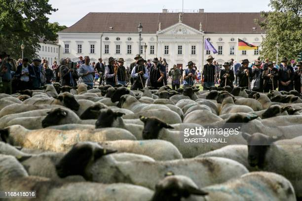 Shepherds drive a herd of sheep in front of Bellevue presidental palce in Berlin on September 15, 2019 to protest falling prices in their industry. /...