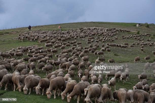 Shepherds guide their flock of sheep along of the 'Oncala' mountain during the seasonal migration from the village of Trujillo, south of Spain, to...