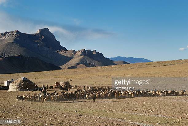 shepherds on roof of world - bernard grua photos et images de collection