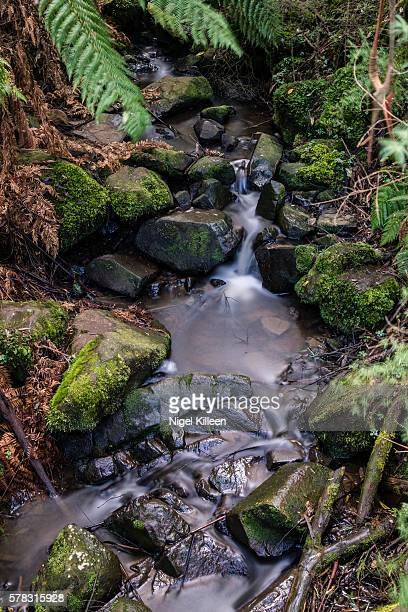 sherbrooke falls, melbourne - dandenong stock photos and pictures