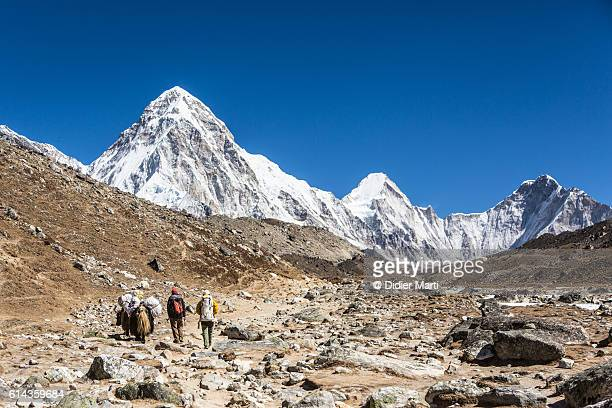 Sherpa and their yak walking toward Everest base camp in Nepal