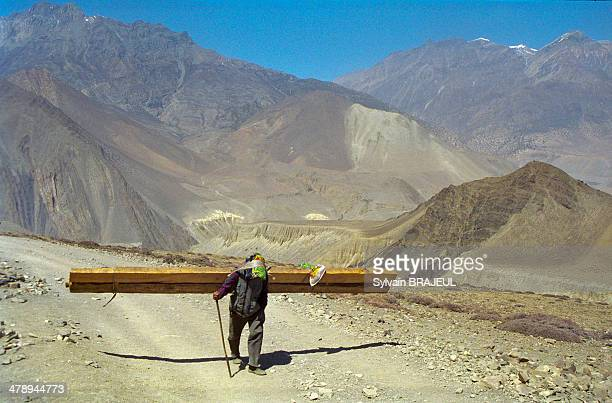CONTENT] A sherpa man is carrying timbers near Kagbeni north of the Annapurna Himalayas in central Nepal Its located on the Annapurna Circuit trek...