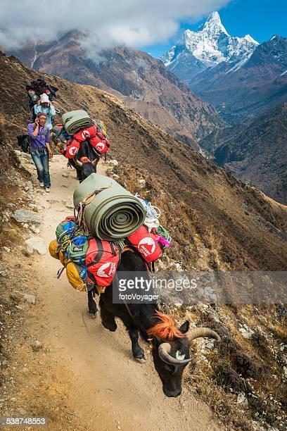 シェルパ女性トレイル yaks 車でヒマラヤ山脈はネパール王室所有の携帯電話を使用 - 職業 ポーター ストックフォトと画像