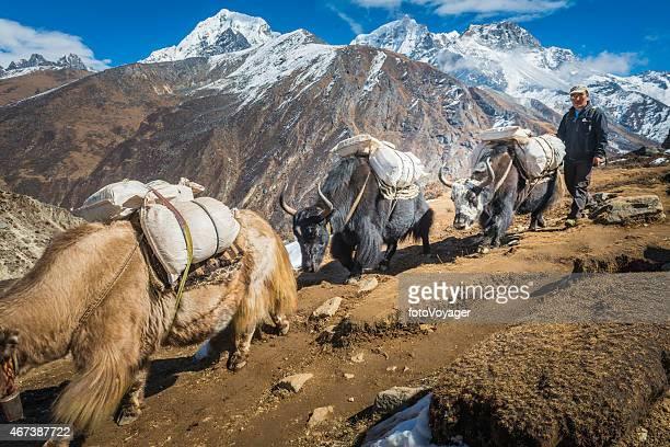 Sherpa yak driver high on Himalaya mountain trail Khumbu Nepal