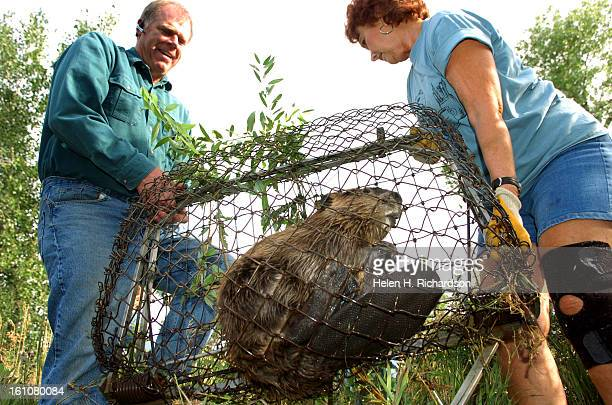 Sherri Tippie <cq> right and Doug Seitz pulls one of two beaver that was live trapped in the ditch that runs through the North Rim subdivision in...