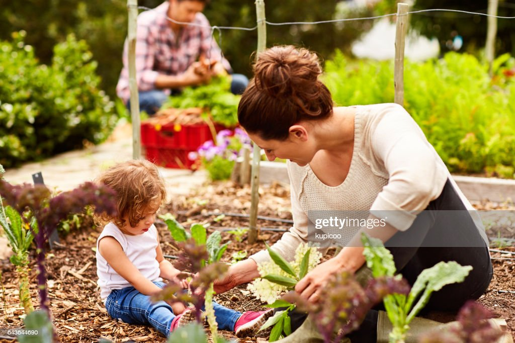 She's a great little gardener : Stock Photo