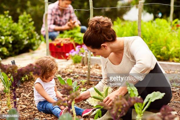 she's a great little gardener - farm woman stock pictures, royalty-free photos & images