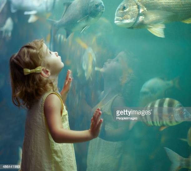 she's focused on those fish - awe stock pictures, royalty-free photos & images