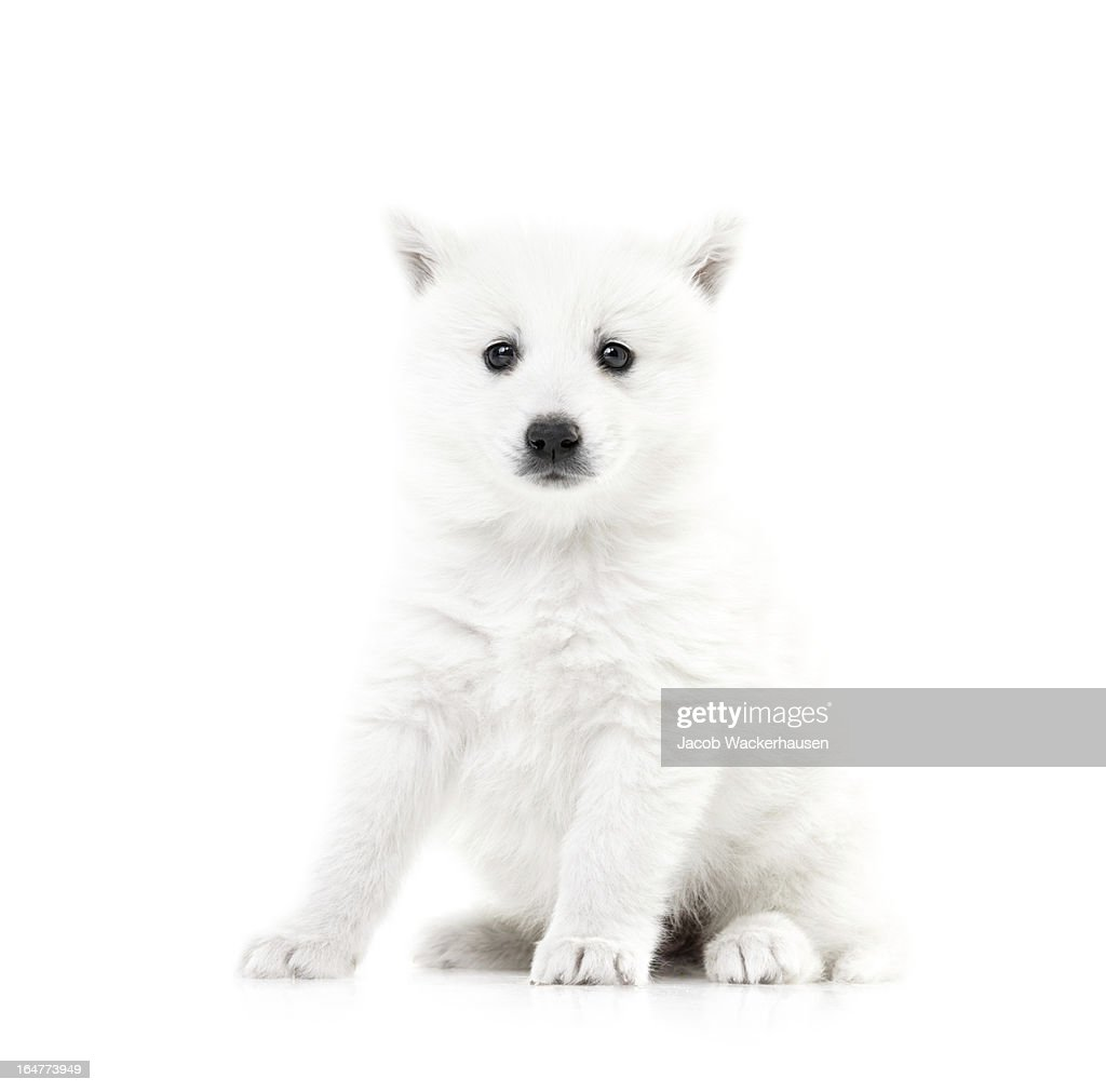 She's going to be a great watchdog : Stock Photo