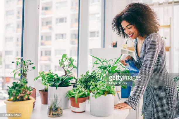 she's plant-savvy - watering stock pictures, royalty-free photos & images