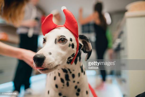 she's ready for halloween! - devil costume stock photos and pictures