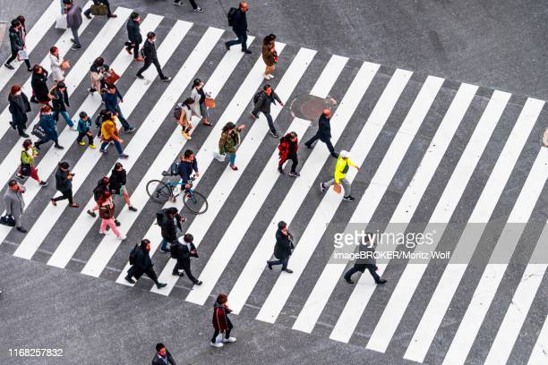 shibuya crossing, crowds at intersection, many pedestrians and cyclists cross zebra crossing, shibuya, udagawacho, tokyo, japan - animated zebra stock pictures, royalty-free photos & images