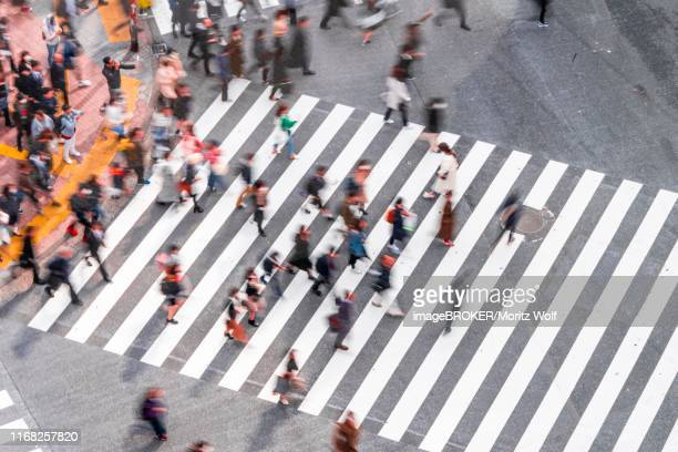 shibuya crossing, crowds at intersection, many pedestrians cross zebra crossing, blurred motion, shibuya, udagawacho, tokyo, japan - animated zebra stock pictures, royalty-free photos & images