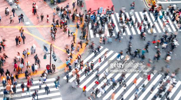 shibuya crossing, crowds at intersection, many pedestrians cross zebra crossing, blurred, motion, shibuya, udagawacho, tokyo, japan - animated zebra stock pictures, royalty-free photos & images