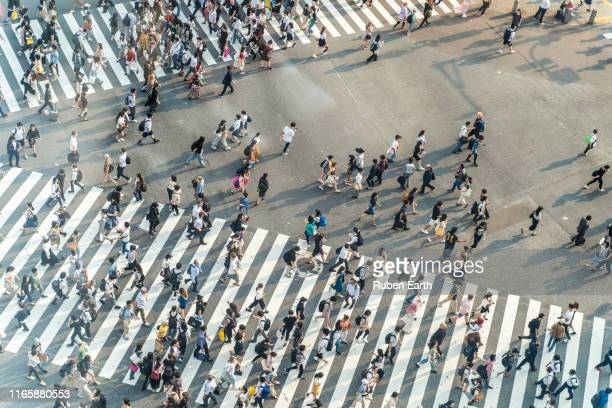 shibuya crosswalk from above - esplosione demografica foto e immagini stock