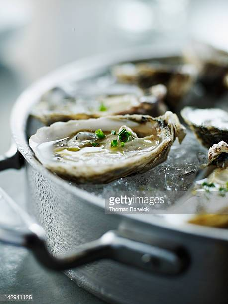 Shigoku oysters on ice