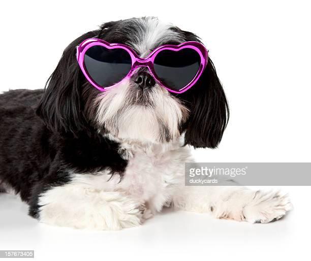 Shih Tzu Dog Wearing Pink Heart Shaped Sunglasses